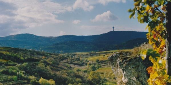 Blick vom Felsenberg ins Berntal und auf den nahen Haardtrand mit Bismarckturm links und Fernmeldeturm rechts am Horizont