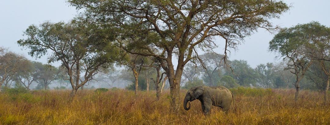 Savannah in Benin