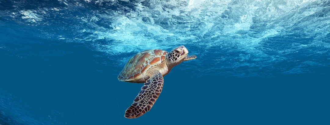 Meeresschildkröte im Karibischen Meer
