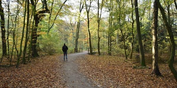 Wanderwege auf der Sechs-Seen-Platte in Duisburg