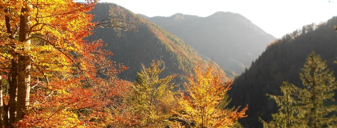 Goldener Herbst in den Göstlinger Alpen