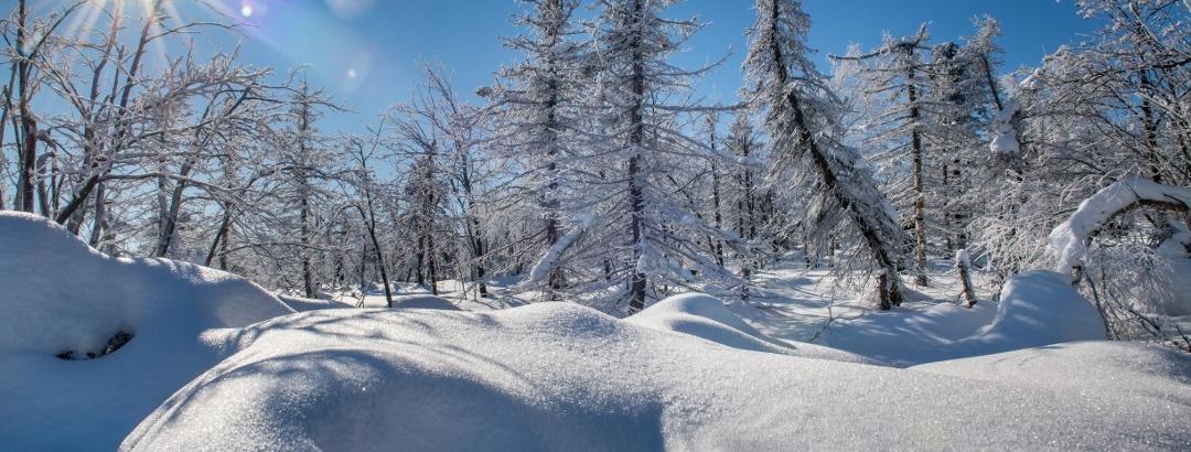 Winterlandschaft in der Urlaubsregion Altenberg