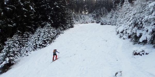 Aufstieg wie Abfahrt folgen der breiten Piste Nr. 8 durch den Wald