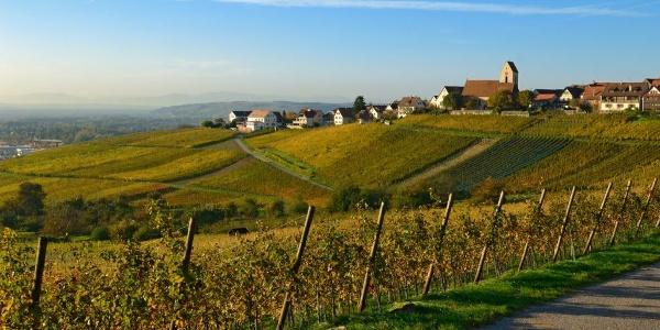 Weinweg Reben Ötlingen