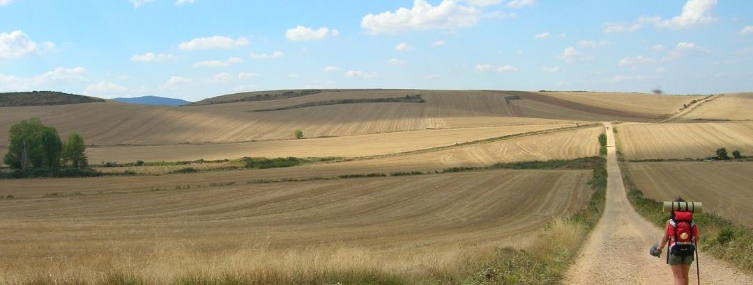 Tramo del Camino de Santiago entre campos de cereales