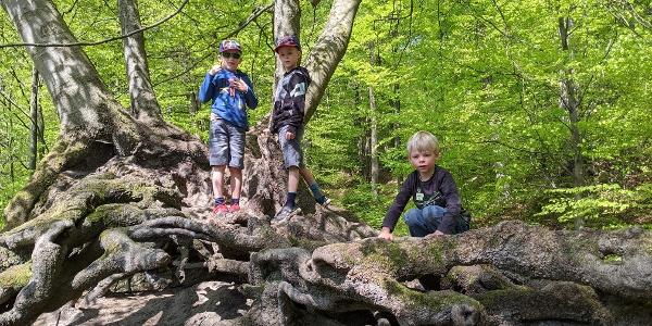 Wurzelzwerge - Wälder bieten Kindern einen riesigen Naturspielplatz