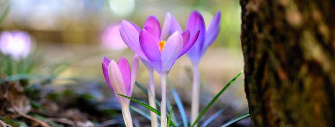 Frühlingserwachen im Osterzgebirge