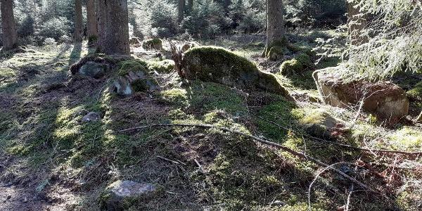 Wald bei Müllenborn