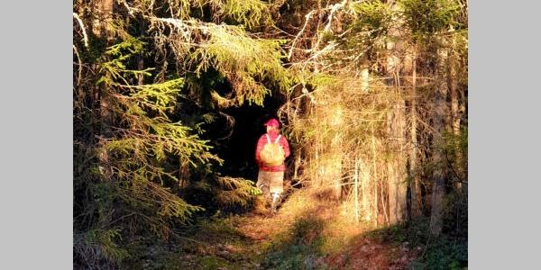 Metsissä on taikaa