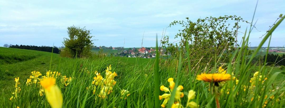 Kleinenberg