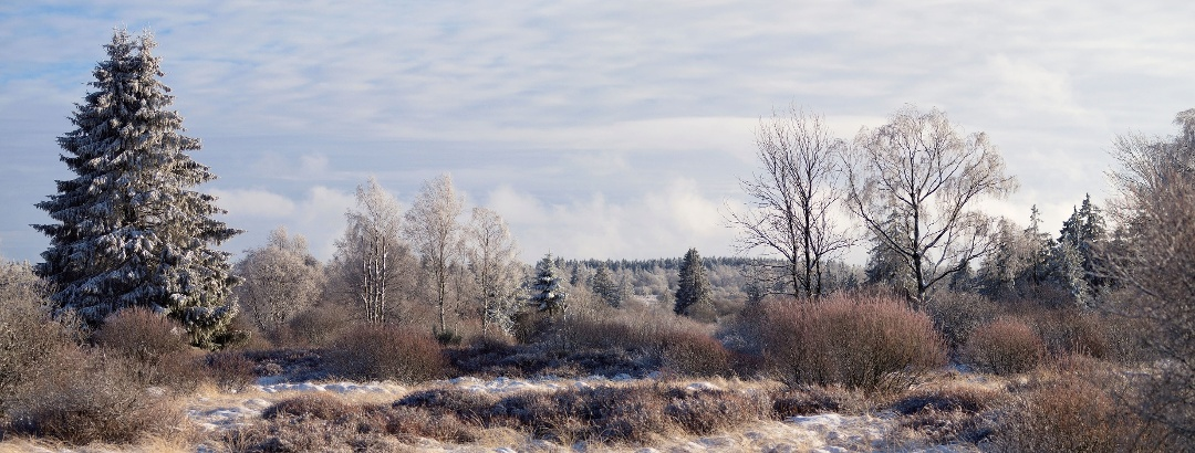 Winterliche Landschaft im Hohen Venn