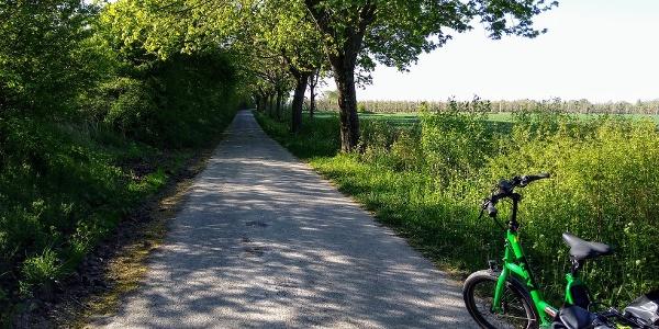 Alter Soestweg mit Obstplantagen