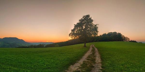 Sonnenuntergang beim einsamen Baum