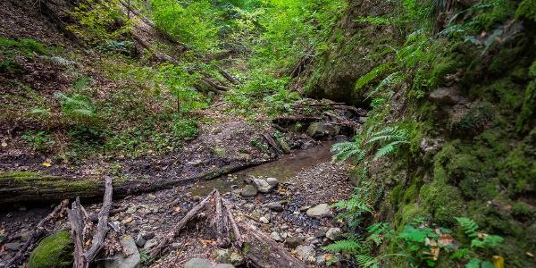 A Kalicsa-patak szurdokárka