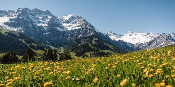 Bergfrühling Adelboden