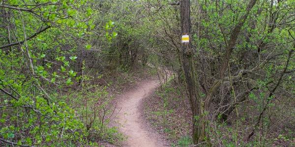 A S jelzésen elindulva és az erdőbe térve kényelmes egynyomos ösvényen kanyargunk