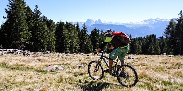 Durch den Wald und über Almwiesen mit großartigen Aussichten von Oberbozen zur Gasserhütte oberhalb von Klausen.