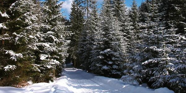 Auf verschneitem Wanderweg zum Ziel