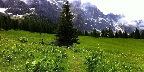 """From the Karerpass you follow the 4th leg of the South Tyrolean """"Perlenweg"""" Eggental via the meadows """"Latermarwiesen"""" below the mountains of the same name."""