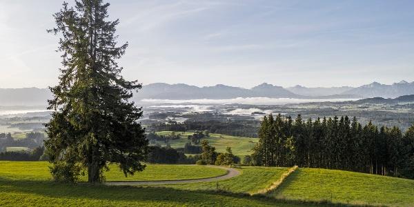 Blick in den Schlosspark am Auerberg