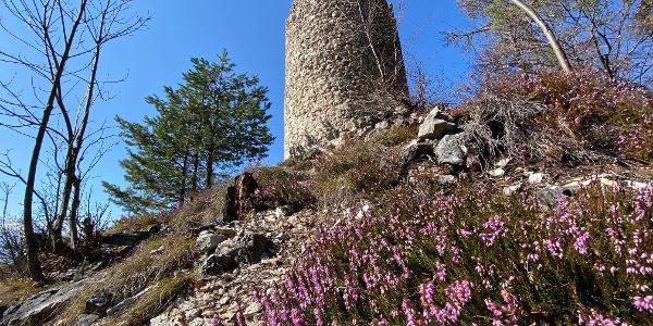 Camminata ai ruderi di Castel San Pietro, alle spalle del famoso Castel Thun