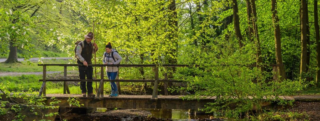 Wandern im Frühlingsgrün