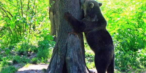 Urs în sanctuarul Libearty