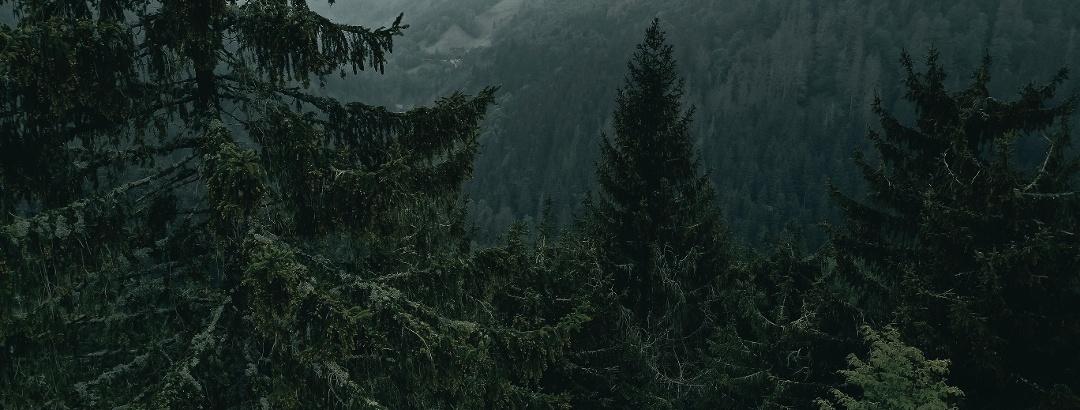Schwarzwald Foto: unsplash