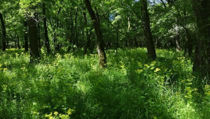 Virágokkal teli az erdő
