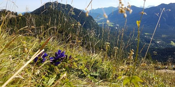 Brunnenkopf mit Blick in Graswangtal
