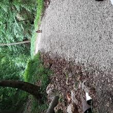 Hubertlaki tó 2021.05.30