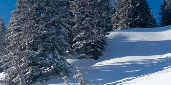 Harte Spurarbeit in den steilen Waldlichtungen ist der Preis für eine schöne Tiefschneeabfahrt.