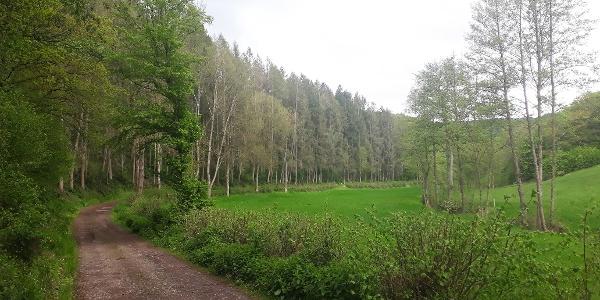 Ein idyllisches Tälchen führt wieder zurück nach Gentingen.