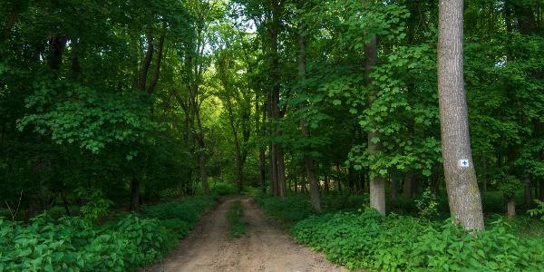 Sötét-völgyi erdőrészlet