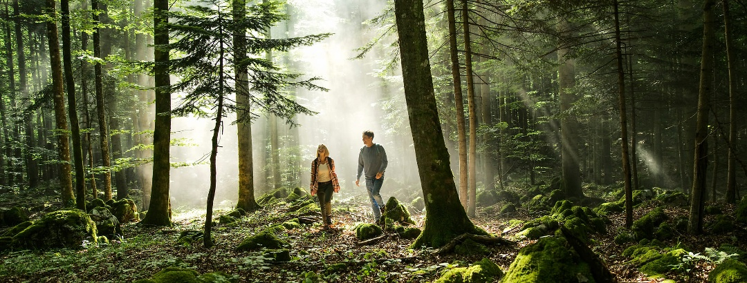 Im Wald Kocevje