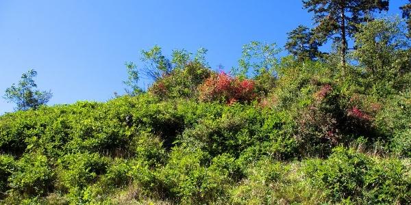 The Sonnenberg (Sun mountain), sparse vegetation and little rainfall /