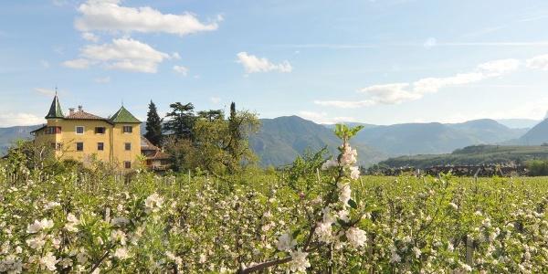 Das Hotel Tschindlhof in Eppan liegt in herrlicher Lage inmitten von Obstgärten.