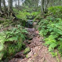 Steiniger Weg zur Hornisgrinde