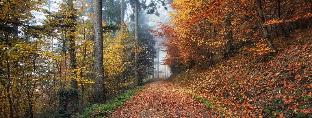 Wandern in Kirchzarten im Schwarzwald