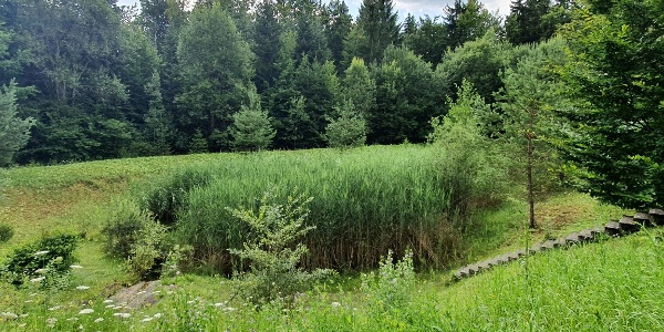 Biotopverbund-Runde Holzbronn - Regenüberlaufbecken