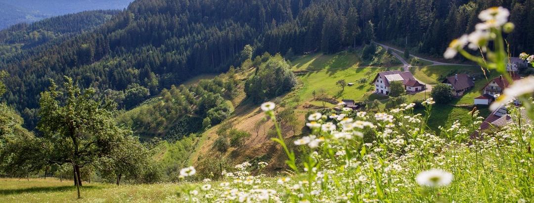 Sommer am Schwarzwaldsteig