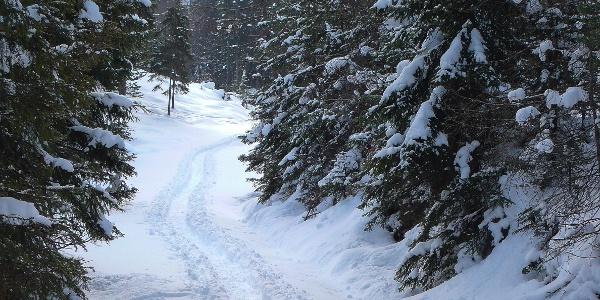 Weg durch den Winterwald