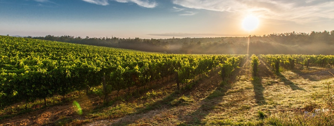 Sunset time in the vineyards of Corbières