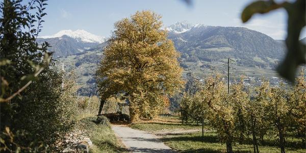 Da Tirolo a Scena
