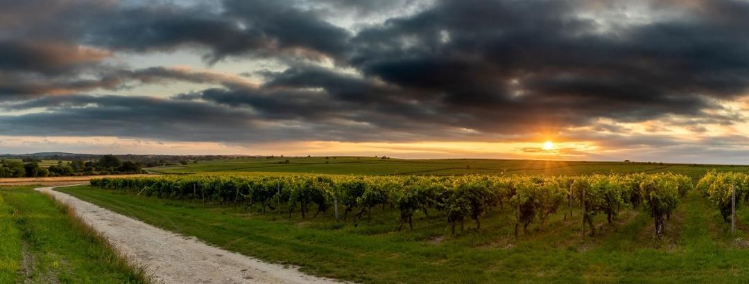 Coucher de soleil sur les vignes à Juillac-le-Coq