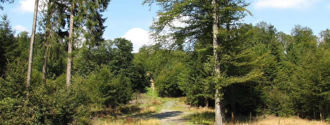 Wälder bei der Ziegenhelle