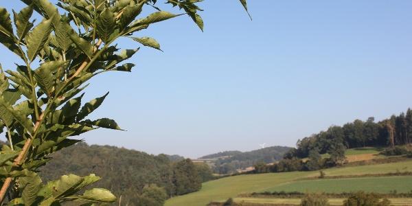Landschaft bei Gföhl