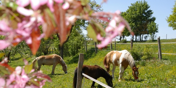 Pferde Familienbauernhof Prediger