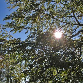 Die Sonne begleitet uns auf dem Weg