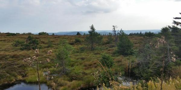 Hochmoorgebiet am Grindenpfad Hornisgrinde